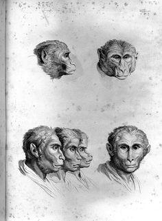 E se tivéssemos evoluído a partir de outros animais?