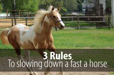 Is your horse a bit too fast? Here are three things you can do to slow him down and make him calmer and more receptive