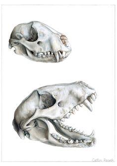 Biomedical Illustrator - Caitlin Rausch