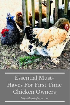 Raising Farm Animals, Raising Ducks, Raising Chickens, Laying Hens, Homestead Farm, Starting A Garden, Coops, Growing Vegetables, Farm Life