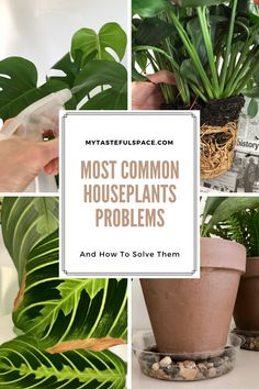 Troubleshooting the most common houseplants problems. #houseplants #houseplantsproblems #gardening #gardeninghacks #gardeningtips #indoorgardening