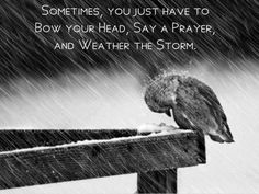 """""""Sometimes, you just have to bow your head, say a prayer, and weather the storm"""" / Have Faith / quotes to inspire and heal Great Quotes, Me Quotes, Inspirational Quotes, Clever Quotes, Faith Quotes, Perseverance Quotes, Gospel Quotes, Bird Quotes, Courage Quotes"""