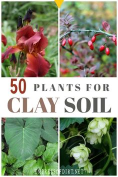 Plants for Clay Soil Got clay soil? These flowering perennials, shrubs, and trees grow in clay soil.Got clay soil? These flowering perennials, shrubs, and trees grow in clay soil. Clay Soil Plants, Planting In Clay, Planting Flowers, Flower Gardening, Flower Garden Design, Garden Soil, Garden Plants, Garden Landscaping, Landscaping Ideas