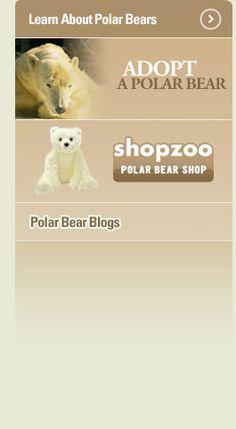 San Diego polar bear cam...so many cams, so little time...