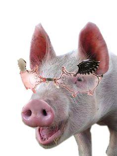 Stupid.com: Flying Pig Sunglasses