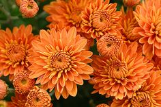 More Orange flowers