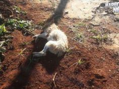 Homem mata cachorro com espingarda de pressão em Cascavel - PR