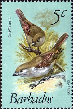 Barbados 1979 Birds SG 624 Fine Mint SG 624 Scott 497 Other West Indies Stamps HERE