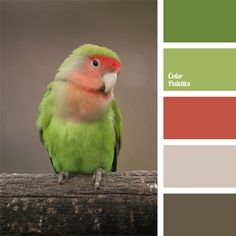 Combination of dark coral color and warm shades of green is softly complemented with brown tones. This color scheme can be used to design a kitchen or a sun-deck of a country house. Pictures of birds with bright plumage will add colors to the classic pastel design of living room or bedroom.