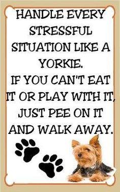 Yorkshire Terrier Magnet for The Refridgerator Stressful Situations Yorkie | eBay #yorkshireterrier