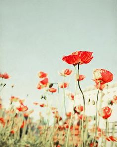Like these poppy prints together