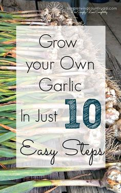 Hey, Peeps! It's time to plant your garlic! If you have never grown garlic before, it easy! Pin now and read later!
