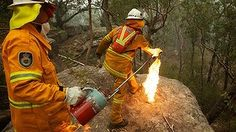 NSW Rural Fire Service Crews in property protection mode throw burning Banksia cones off an escarpment as they commence a back burn north of the Bells Line of Road between Berambing and Bilpin. Spark Up, My Community, Blue Mountain, Firefighter, Career, Natural, Carrera, Firefighter Bar, Freshman Year