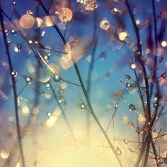 #water #drops #sun