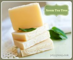 The many benefits of Neem Oil and why it is great for your skin!