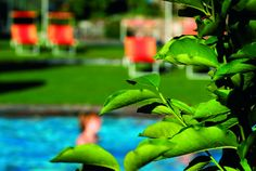 Outdoor pool at 4 star Hotel Lindenhof in Naturns