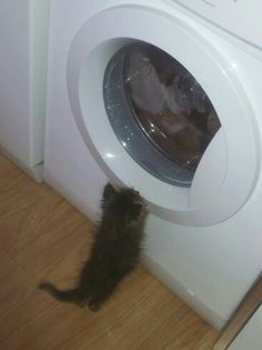 My #cat, the #desperatehousewife #funny #kitten