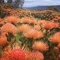 Cut Flower Garden, Flower Farm, Desert Plants, Tropical Plants, Exotic Flowers, Cut Flowers, Guava Tree, Bloom And Wild, Outdoor Plants