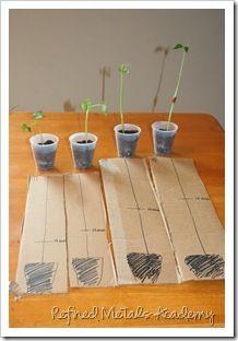 Plant Unit ideas, links, pictures, printables