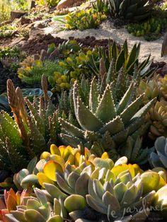 Design by Laura Eubanks in the garden of Debra Lee Baldwin #succulents