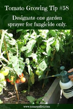Choose and Apply Fungicide to Tomato Plants: The Basics Tomato Growing Tip designate one garden sprayer solely to apply fungicide with Tomato DirtTomato Growing Tip designate one garden sprayer solely to apply fungicide with Tomato Dirt Growing Tomatoes From Seed, Growing Tomato Plants, Growing Tomatoes In Containers, Grow Tomatoes, Baby Tomatoes, Dried Tomatoes, Cherry Tomatoes, Container Vegetables, Planting Vegetables