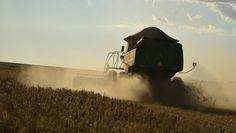Companhia estima uma produção maior do que na safra anterior, apesar das dificuldades encontradas no campo