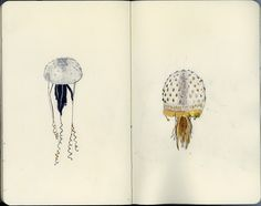 Glass sea creatures by Wil Freeborn, via Flickr