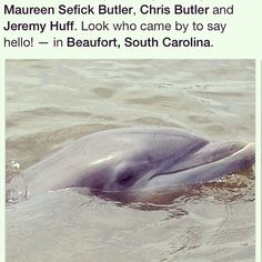 So many dolphins live in our waters in Beaufort SC, we are lucky to see them on a regular basis!  Anchorage 1770