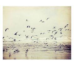 River of Birds Framed Print by Lupen Grainne #potterybarn