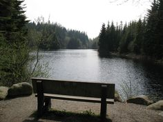 A bench sits at one end of Rice Lake offer a break with a relaxing view