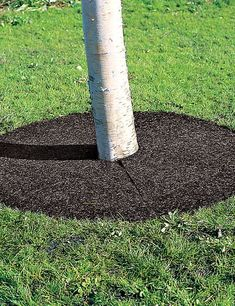 This recycled rubber tree ring will never scatter, even when you run a mower over it. Landscaping Supplies, Home Landscaping, Front Yard Landscaping, Garden Supplies, Sidewalk Landscaping, Brick Sidewalk, Landscaping Edging, Garden Tools, Mulch Around Trees