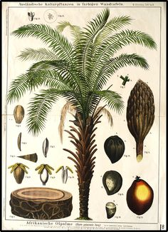 Zippel + Bollmann botanical wall charts