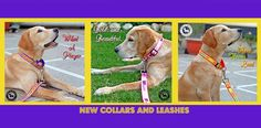 A blogger's review about India's leading Online Dog Store Headsupfortails.com. Read on!