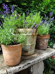 Get The Perfect Herb Garden With These Simple Tips Herb gardening is an excellent way to make sure that your family is getting the best produce that they can. Back Gardens, Small Gardens, Outdoor Gardens, Terracotta Pots, Dream Garden, Garden Inspiration, Garden Pots, Beautiful Gardens, Container Gardening