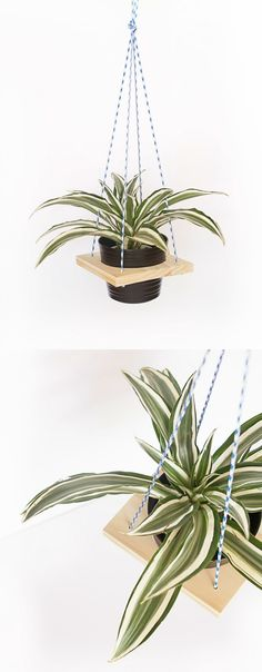 Use a plywood block to make this simple and modern DIY plant hanger - you'll have a few of these hanging in your home before long!