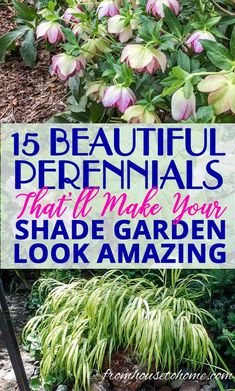 These shade loving perennial ground cover plants are AWESOME! So many pretty flowers that will look great in my backyard shade garden. garden 21 Stunning Perennial Ground Cover Plants That Thrive in the Shade - Gardening @ From House To Home Part Shade Perennials, Flowers Perennials, Shade Flowers Perennial, Full Sun Perennials, Hardy Perennials, Shade Garden Plants, Garden Shrubs, Flowering Shrubs, Shade Loving Shrubs