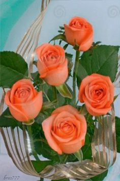 Decent Image Scraps: Animated Roses - O Significado das Quantidades - 5 rosas Eu… Good Morning Rose Images, Good Morning Roses, Morning Pics, Good Morning World, Peach Colored Roses, Yellow Roses, Peach Rose, Flower Images Free, Flower Pictures