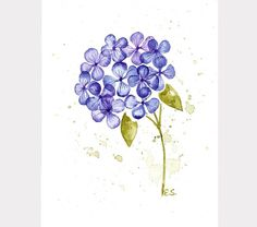 Flower watercolor Hydrangea Original watercolor painting wall art Floral spring home decor Botanical design Blue purple and green by BluePalette on Etsy https://www.etsy.com/listing/288271829/flower-watercolor-hydrangea-original