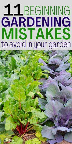 Gardening Zones, Gardening Tips, Amazing Gardens, Beautiful Gardens, Easy Vegetables To Grow, Plant Diseases, Backyard Vegetable Gardens, Sun And Water, Garden Pests