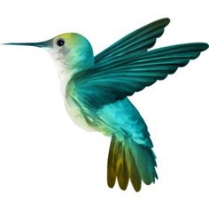 Hummingbird Painting, Hummingbird Tattoo, Hummingbird Pictures, Bird Artwork, Bird Drawings, Colorful Birds, Beautiful Birds, Body Art Tattoos, Pet Birds