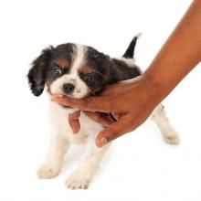 Train your puppy to stop nipping and biting with this easy two-step process.