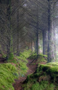 On the path to King's Cave, Isle of Arran, Scotland.On the path to King's Cave, Isle of Arran, Scotland. Oh The Places You'll Go, Places To Travel, Places To Visit, Travel Destinations, Beautiful World, Beautiful Places, Beautiful Forest, Isle Of Arran, All Nature
