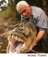 Jeremy Wade catching a killer fish.
