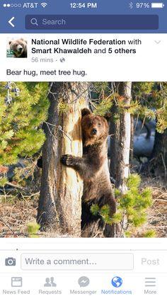 National Wildlife Federation Brown Bear, Charity, Hug, Wildlife, Facebook, Animals, Animales, Animaux, Animal