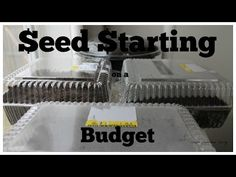 Starting Seeds on a Budget - Start Your Garden Without Buying Supplies ~ Simple Suburban Living