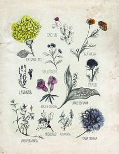 Flores - Revista Entrecasa by maria-elina, via Flickr