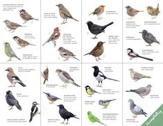 Vogel Clipart, British Wildlife, Forest School, Fauna, Green Grass, Bird Watching, Wildlife Photography, State Parks, Birds