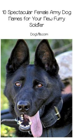 Want to celebrate your love of all things Army? Check out these 10 spectacular female Army dog names for your new little furry soldier! Army Dogs, Military Dogs, Military Service, Cute Dogs Breeds, Dog Breeds, Dog Stories, Funny Dog Pictures, Dog Names, Funny Dogs