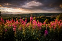 https://flic.kr/p/KS2VXq | Sunset flowers |   www.tenmenphotography.com     or please 'Like' my facebook page at…