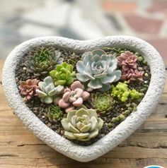 The stream problems are specifically troublesome relating to or simply near a spot that you would like to enjoy prefer adeck. #patiodrainage Indoor Tropical Plants, Indoor Planters, Painted Clay Pots, Painted Flower Pots, Succulent Pots, Succulents, Cement Flower Pots, Rustic Flowers, Garden Design